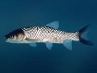В СПК «Першаи-2003» Воложинского района осваивают новый вид деятельности — рыбоводство