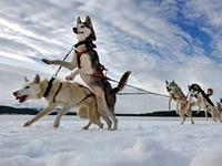 Программа гонок на собачьих упряжках ЗАВIРУХА-2012 под Раковом (+КАРТА ПРОЕЗДА)
