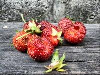 Любителям клубнички: все о полезных свойствах сладкой ягоды